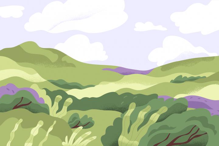 Peisaj de vară